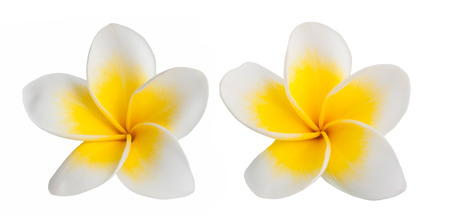 Peach flower: two Frangipani flowers isolated on white background