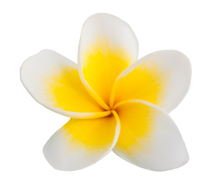 Single Frangipani flower  isolated on white background
