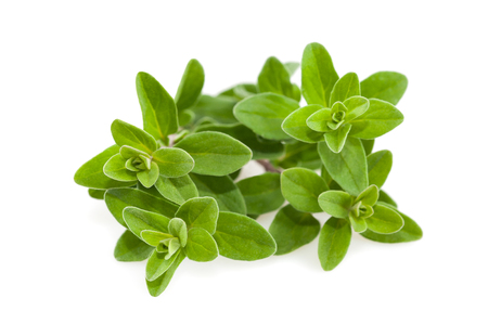 Bunch of marjoram isolated on white background Standard-Bild