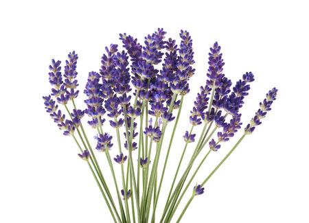 flor de lavanda: Flores de lavanda aislado en blanco