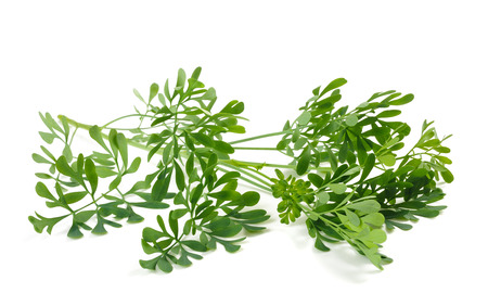 ruta: Rue branch isolated on white Stock Photo