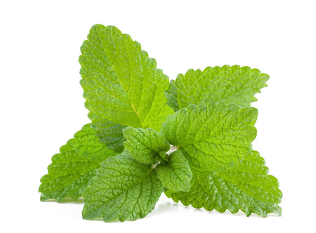 Fresh lemon balm bunch isolated on white background Stock Photo