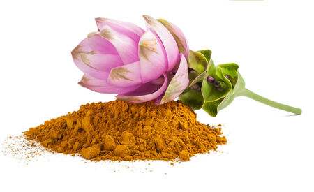 spicy plant: Curcuma flower and  powder isolated on white Stock Photo