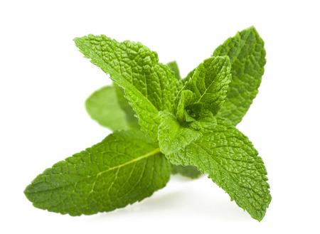 Fresh mint sprig isolated on white background