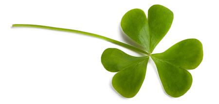 oxalis: wood sorrel leaf isolated on white Stock Photo