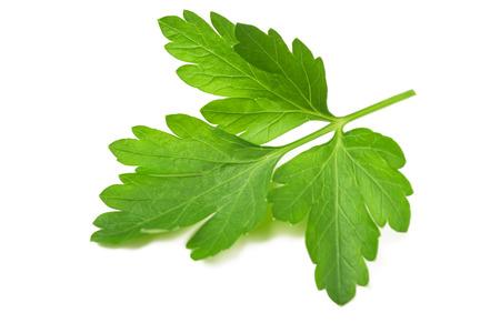 sprig: Fresh parsley sprig  isolated on white background