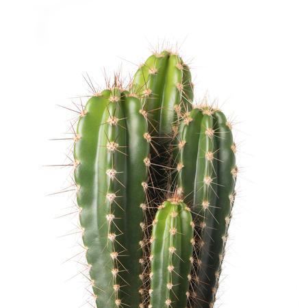 plantas del desierto: cactus aisladas sobre fondo blanco
