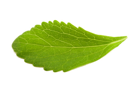 officinal: Stevia leaf isolated on white background Stock Photo