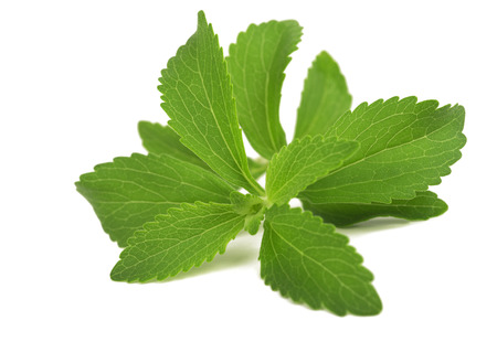 Stevia rebaudiana plant  isolated on white background Stock Photo
