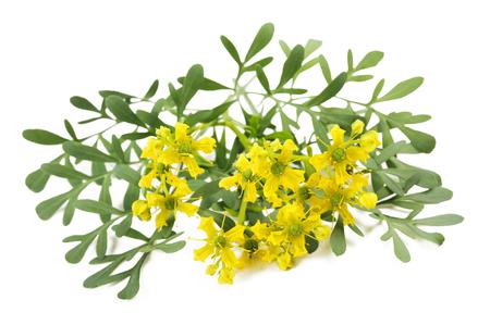 恵みの花や葉の白で隔離のハーブ 写真素材