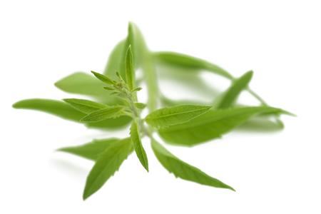 menta: La hierba de limón (verbena) aislado en fondo blanco