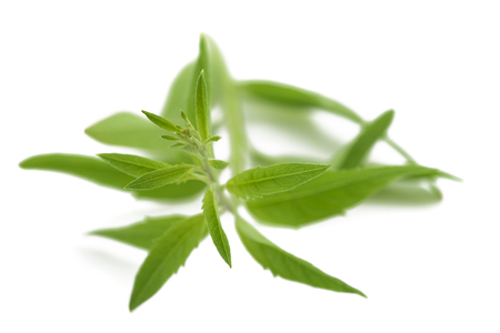 Lemon grass (verbena) isolated on white background Banque d'images