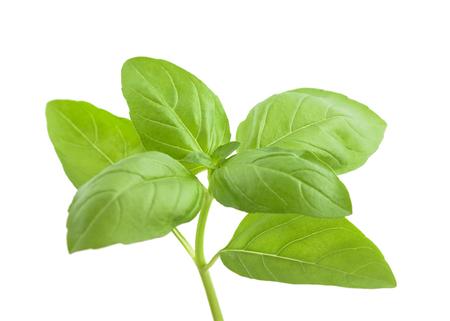 basils: Basil sprig isolated on white background Stock Photo