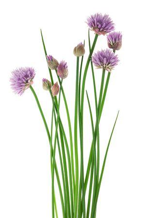 garlic: Cebolletas con flores aisladas sobre fondo blanco Foto de archivo