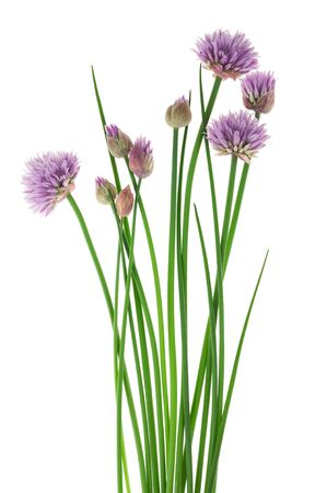 garlic: Chives with Flowers isolated on white background