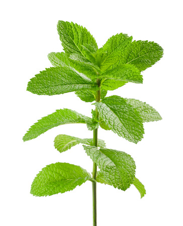mint sprig isolated on white background