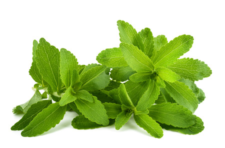Stevia rebaudiana sprigs  isolated on white background
