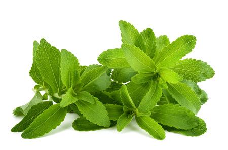 Stevia rebaudiana sprigs  isolated on white background