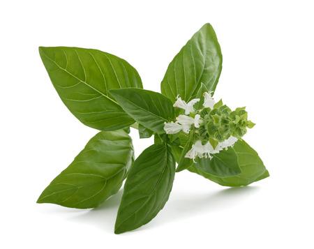 basilio: Albahaca con flores aisladas sobre fondo blanco