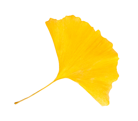 dried leaf: ginkgo dried  leaf isolated on white background Stock Photo