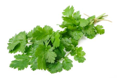 cilantro: Manojo de cilantro fresco aislado en el fondo blanco