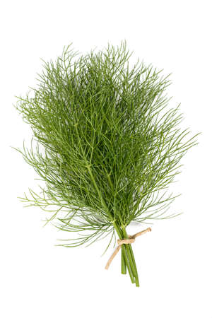 foeniculum vulgare: Fresh dill isolated on white background
