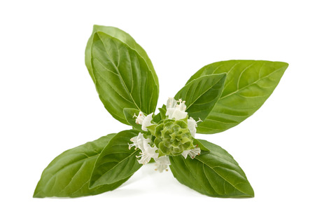 basils: Basil with flowers  isolated on white background Stock Photo
