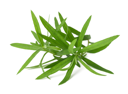 tarragon: Tarragon (Artemisia dracunculus)  isolated on white background Stock Photo