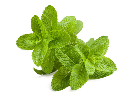 Fresh mint sprigs isolated on white background