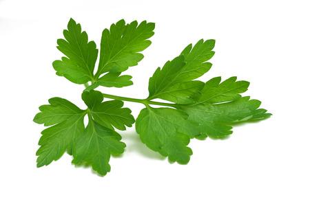 Fresh parsley sprig isolated on white background