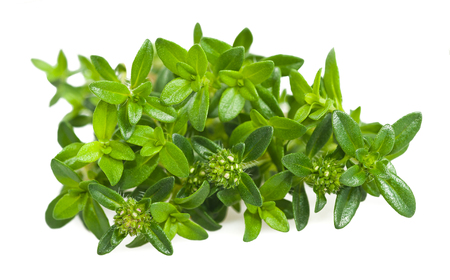 marjoram: Summer savory branch isolated on white Stock Photo