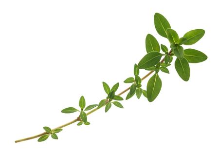 sprig: thyme sprig isolated on white background Stock Photo