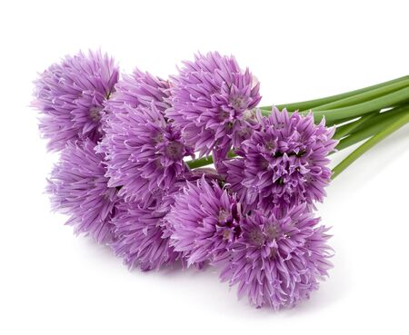 Allium flower: Chives  Flowers isolated on white background