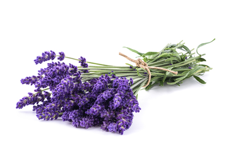 Lavender flowers bunch isolated on white background Stock Photo