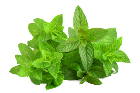 Fresh mint mix  isolated on white background