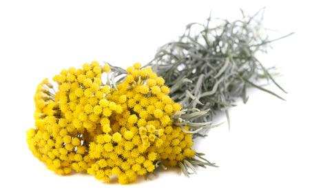 Helichrysum bloemen op een witte achtergrond Stockfoto - 62327391
