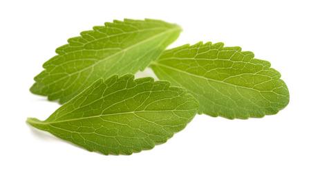 Stevia leaves isolated on white background Imagens - 64499596