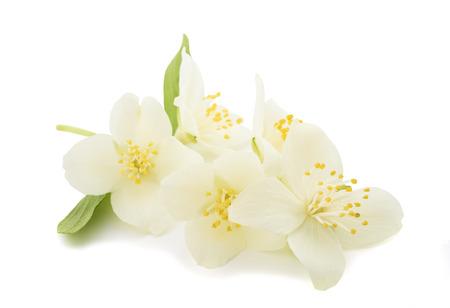 白い背景に分離されたオレンジの花 (zagara)