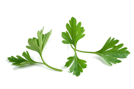 Fresh parsley sprigs isolated on white background Фото со стока