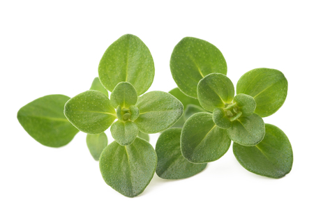 Thyme sprig isolated on white
