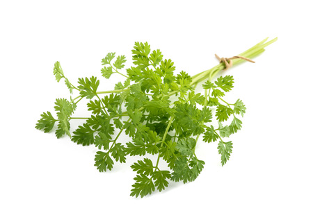 Fresh Chervil bunch isolated on white background Imagens