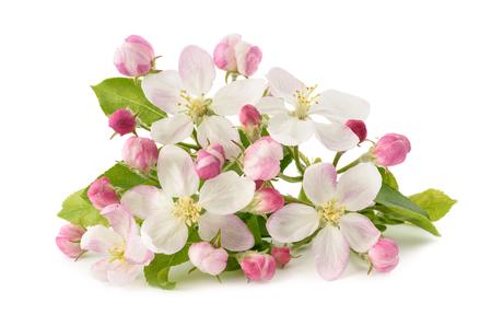 白い背景で隔離の芽と花