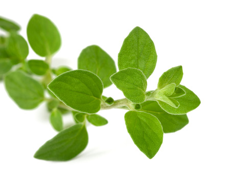 herbs de provence: oregano sprig isolated on white background Stock Photo