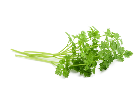 Fresh Chervil bunch isolated on white background Banco de Imagens