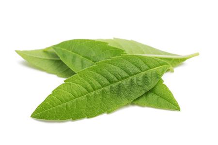Citroenverbena bladeren (beebrush) geïsoleerd op een witte achtergrond Stockfoto - 85112207