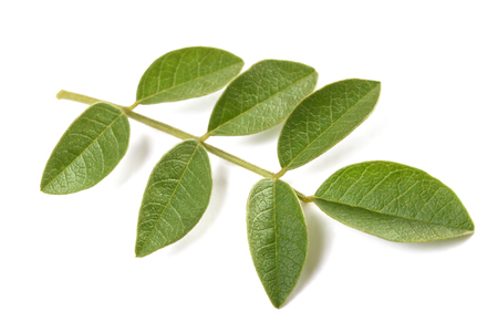 licorice branch isolated on white background Stockfoto
