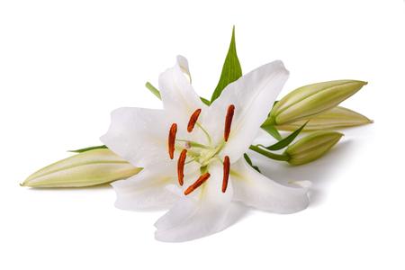 白いユリの花が白い背景で隔離 写真素材