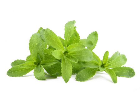Stevia rebaudiana isolato su sfondo bianco Archivio Fotografico - 87593271