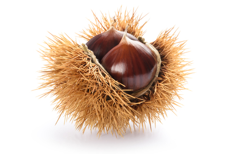 Fresh sweet chestnuts in the shell isolated on white Banco de Imagens - 91297326