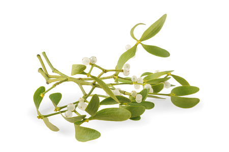 mistletoe branch with berries isolated  on white background